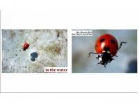 41_diapositiva4_v3.jpg